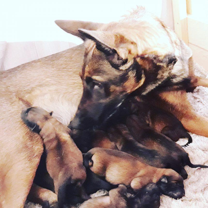 La famille s'agrandie beaucoup!