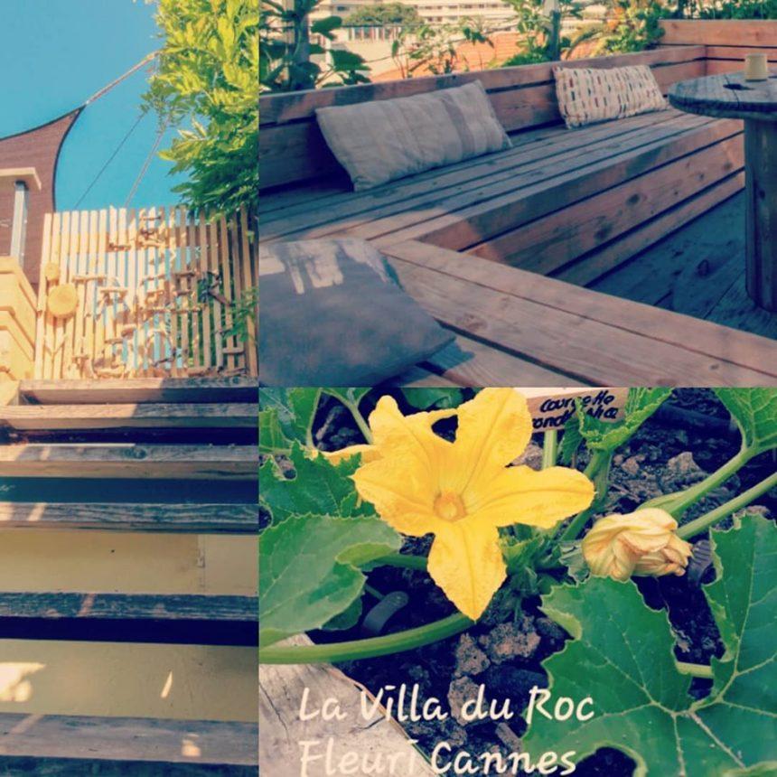 Notre jardin potager!