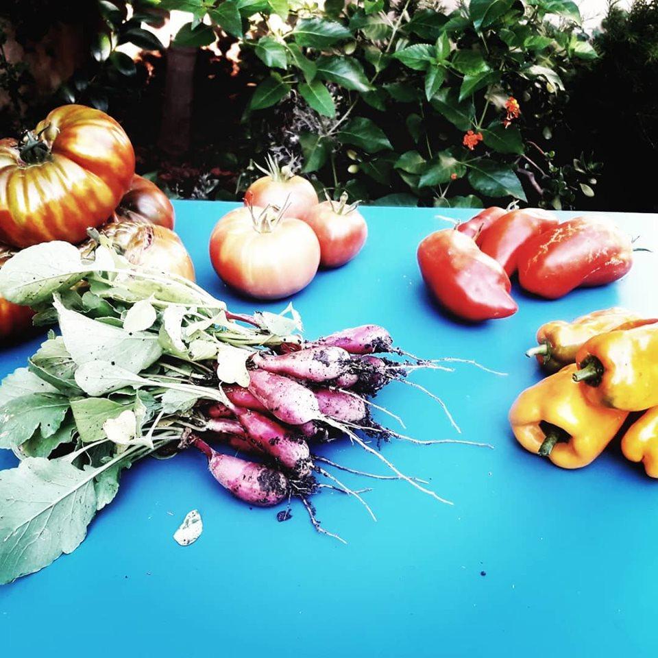 legumes de notre potager