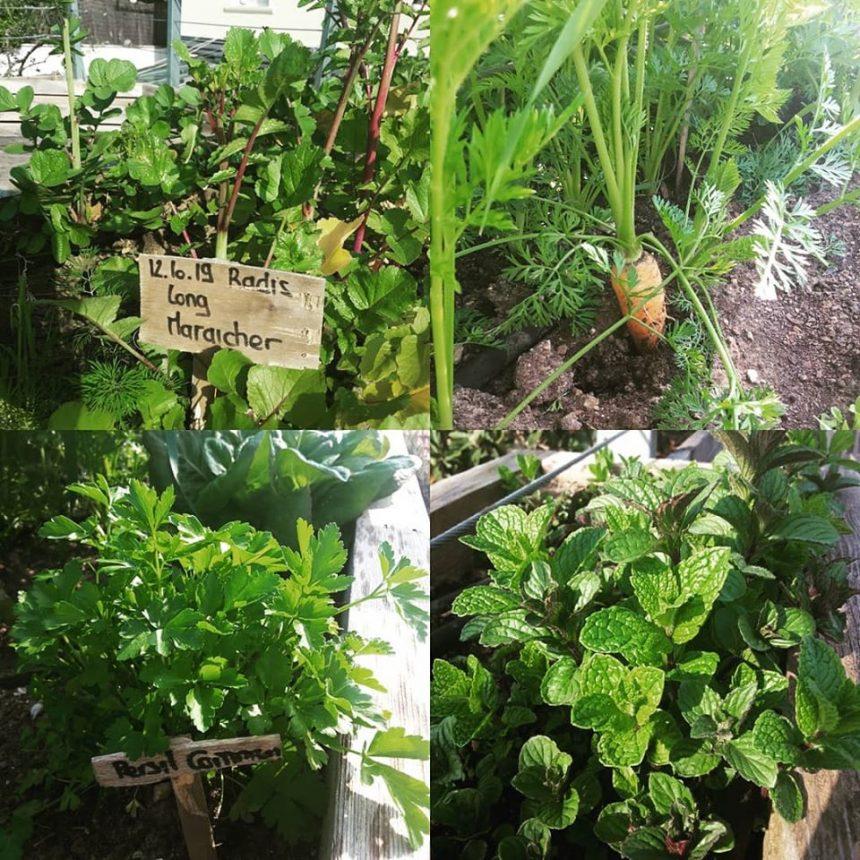 Jardin potager d'hiver